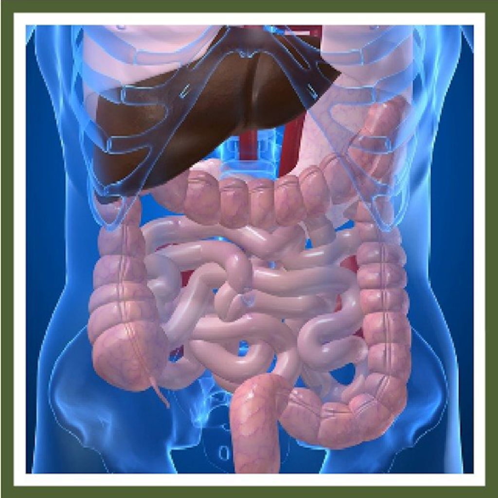 Digestion in the colon