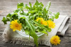 A Dandelion Greens Recipe Adventure